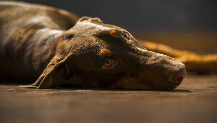 Brain Tumors In Dogs: Symptoms, Causes, & Treatments
