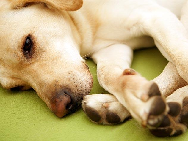 Treatments for Arthritis in Pets