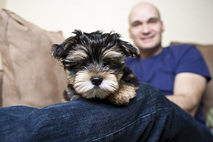 "Yorkshire Terrier ""Yorkie"" Puppies: Facts And Pictures"