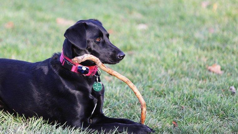Electric Invisible Fences For Dogs: Pros And Cons
