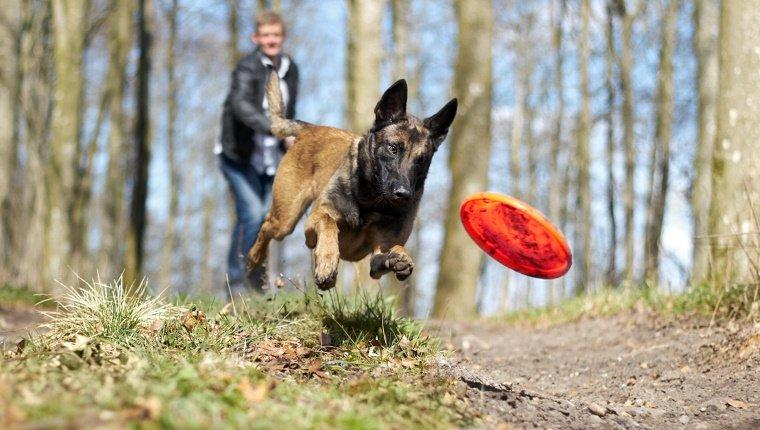8 Common Mistakes Owners Make When Training Their Dogs