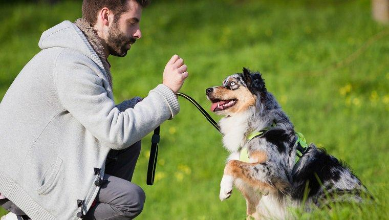 What Is Your Dog Parenting Style?