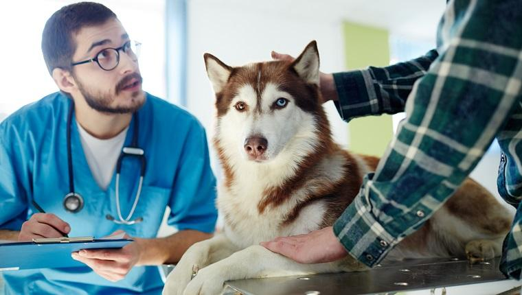 November Is Pet Cancer Awareness Month: Here's What You Should Know