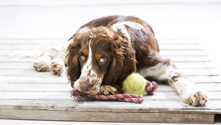 Stop Your Dog's Stinky Breath With Natural Foods