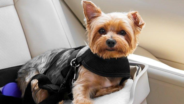 The Right Type Of Dog Harness For Your Dog