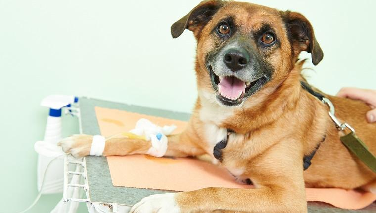 Clinical Trials With Dogs Helping Find Cures For Cancer In Humans