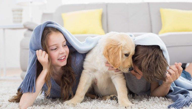 6 Puppy Games To Play With Your New Puppy