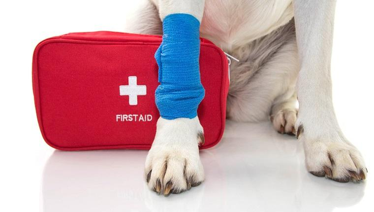 National Pet First Aid Awareness Month: Spread The Word To Keep Pets Safe