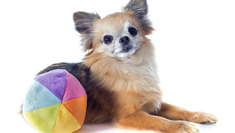 Gold Souls, Gray Faces: 6 Indoor Exercises For Senior Dogs