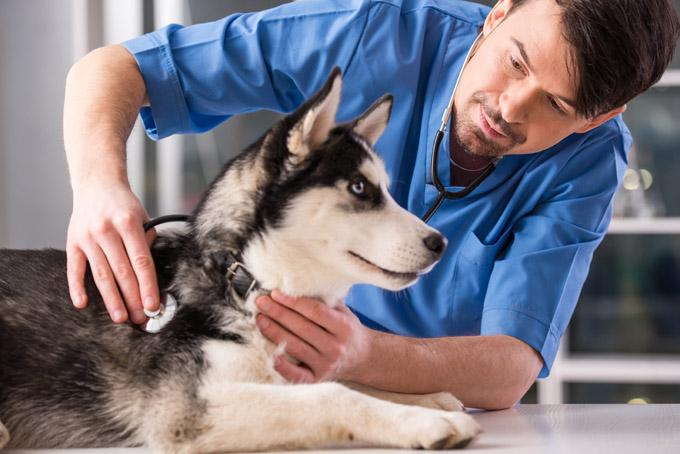Finding The Right Veterinarian