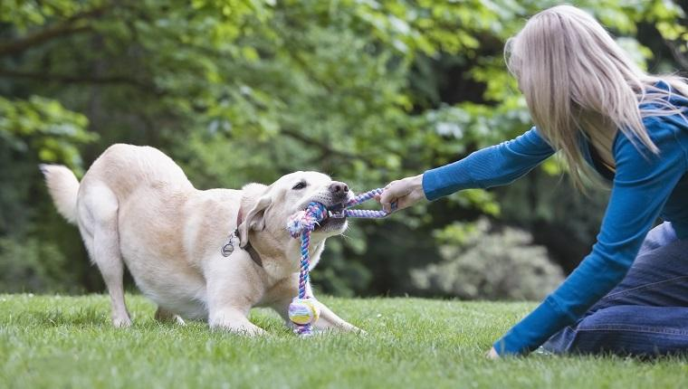 Gold Souls, Gray Faces: 6 Tips For Cleaning Your Senior Dog's Teeth