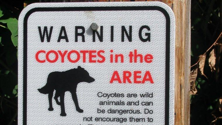8 Ways To Protect Your Dog From Coyote Attacks