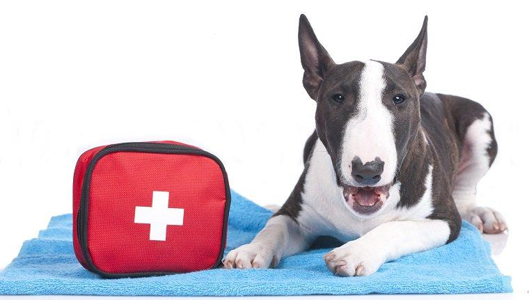 Wildfires: Preparedness And Evacuation Plan For Pets