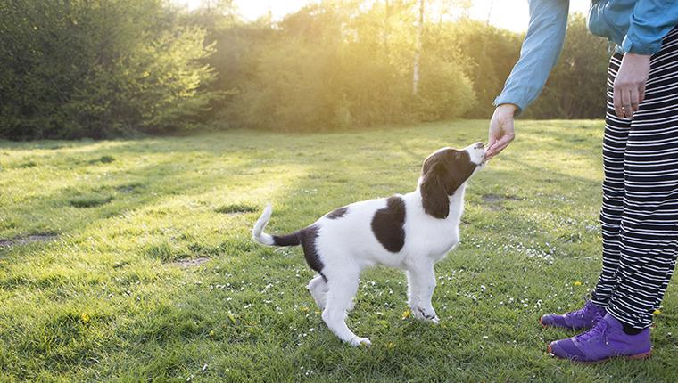 Raising Your Puppy: 6 Tips To Help With Housetraining