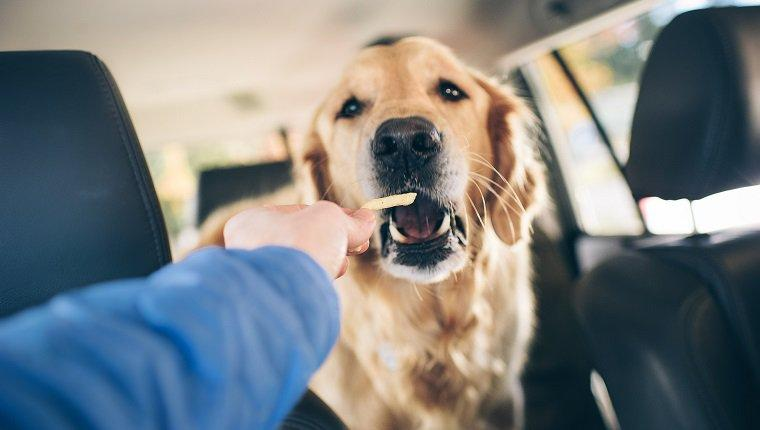Can Dogs Eat French Fries? Are French Fries Safe For Dogs?