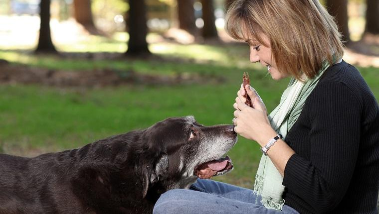 Gold Souls, Gray Faces: 6 Outdoor Exercises For Senior Dogs