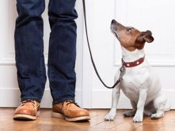 8 Great Skills To Teach Your Newly Adopted Dog