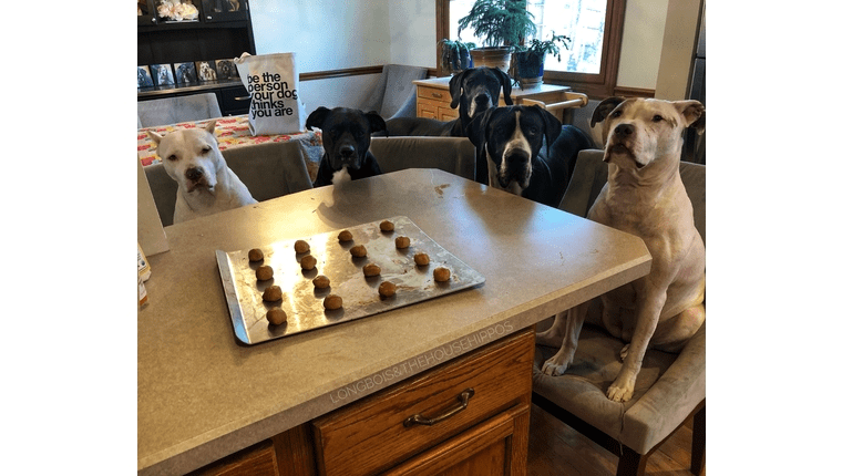 Dog Mom: The Ultimate Easy, Healthy, Homemade Dog Treat Recipe
