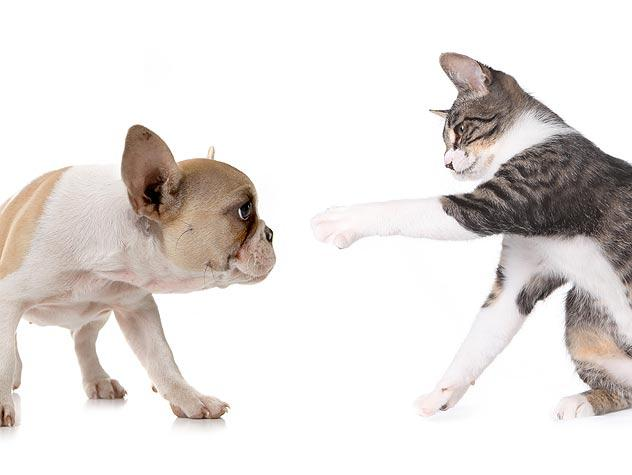 My Dog Chases My Cat. How Do I Stop Him?