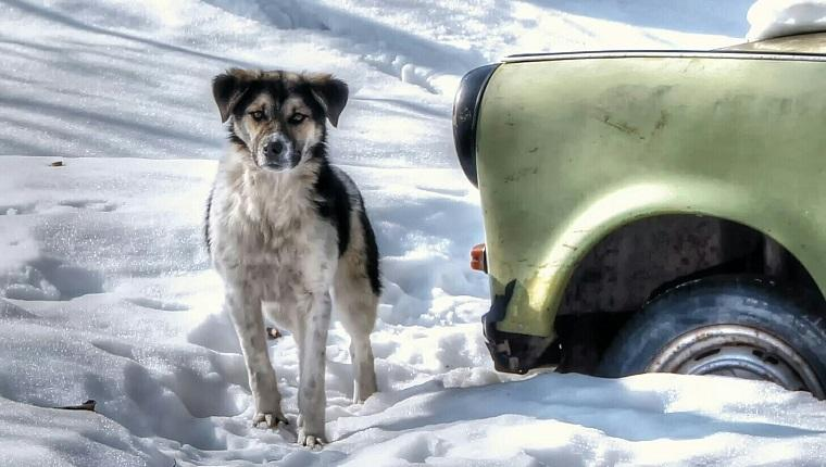 Polar Vortex: 4 Tips To Keep Your Dog Safe From The Deep Freeze