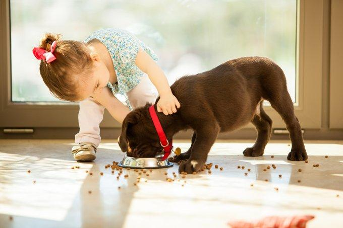 Stop feeding puppy food?