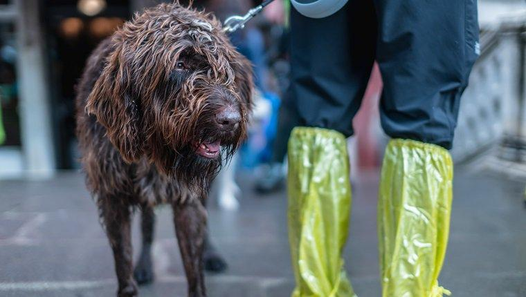 Flood Preparedness And Safety Tips for Dog Owners