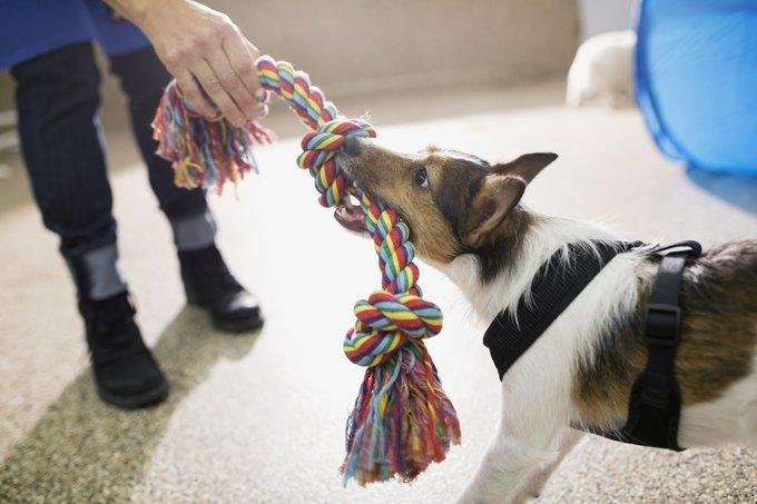 Set Up A Playroom To Help Potty Train Your New Pup Or Dog