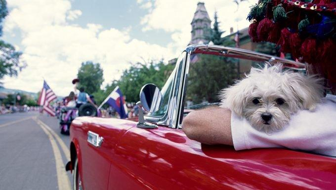 4th Of July Safety Tips For Dog Owners