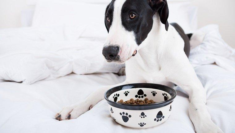 5 Eating Disorders That Affect Dogs