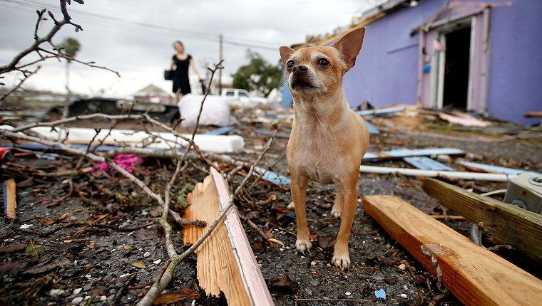 Tornado Preparedness And Safety Tips For Dog Owners
