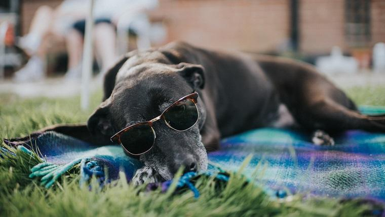 How To Keep Your Dog Safe In Summer: 10 Questions With Dr. Kurt Venator, DVM, PhD