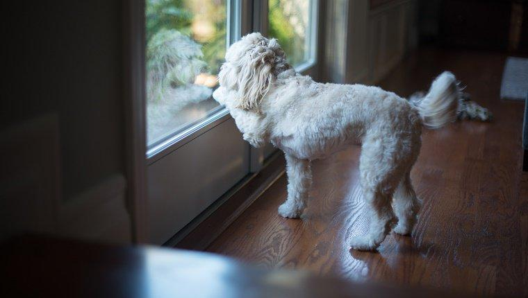 10 Tips To Ensure You Won't Lose Your Dog