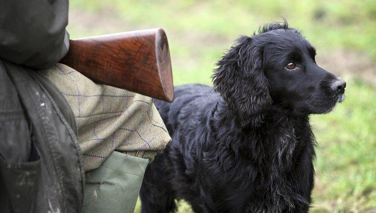 9 Stories That Prove You Should Never Leave A Gun Where Dogs Can Reach