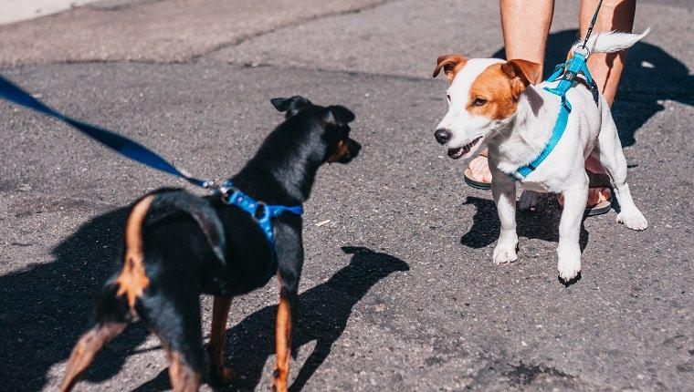 4 Real World Examples of Dog Body Language