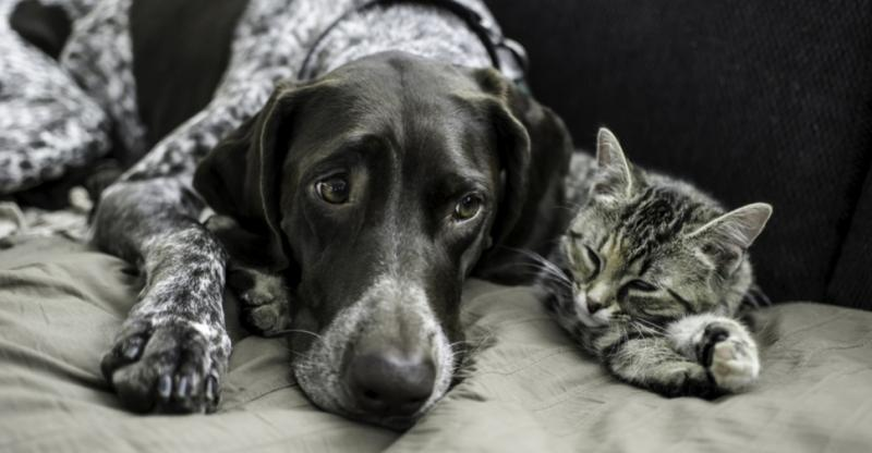 How to De-stress a Dog or Cat