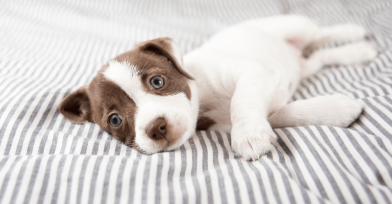 Dog and Puppy Vaccinations: Schedule and Costs