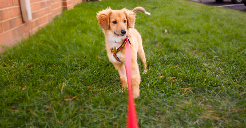 How to Potty Train a Puppy: Every Step for Success