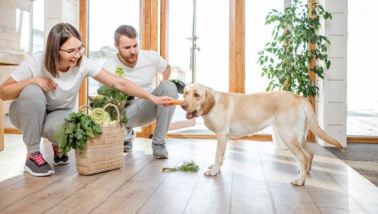 5 Best Dietary Supplements For Your Dog