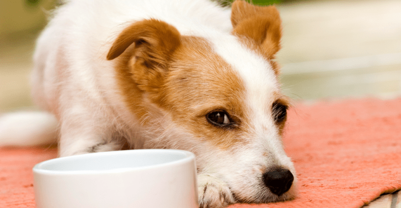 Raw Food Diet for Dogs: Should You Do It?